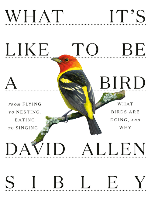 What Its Like To be a Bird (Sibley Guides). David Allen Sibley
